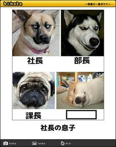Witty Remarks, Funny Comics, French Bulldog, Jokes, Kawaii, Japanese, Manga, Humor, Cute