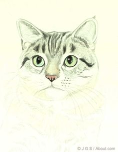 Learn how to draw a beautiful realistic cat colored pencil, step by step, with equine and wildlife artist Janet Griffin-Scott.: Draw a Cat - Nose and Whiskers