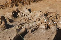 Pristine 40,000-year-old mammoth skeleton uncovered in North Texas