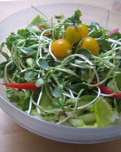 Sprout Avocado Salad