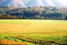 Visit My Smokies releases a step-by-step guide to the popular Cades Cove Loop Road with a map for visitors to use.