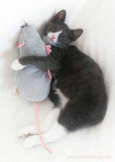 Kitten More Cat Zvv, Kitty Cat, Animal Freak, Animal Xoxo, Teddy Rats, C 4Sleep Cat, Kittens Mouse, Toms And Jerry, C4Sleep Cat My teddy rat! Tom and Jerry ^^