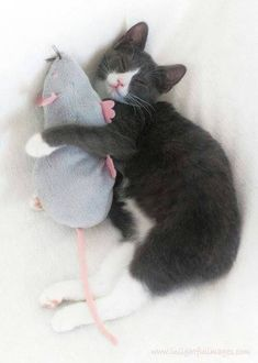 Kitten More Cat Zvv, Kitty Cat, Animal Freak, Animal Xoxo, Teddy Rats, C 4Sleep Cat, Kittens Mouse, Toms And Jerry, C4Sleep Cat My teddy rat! Tom and Jerry ^^