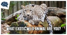 What Exotic Wild Animal Are You? | BrainFall