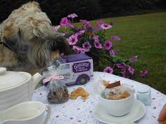 Winston enjoying his tea on the lawn at Royvon Merthyr