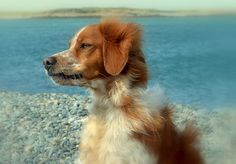 wow...such a beautiful pup!