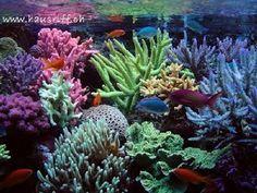 relaciones intraespecificas colonial ejemplos - Búsqueda de Google Colonial, Ocean, Plants, Inspiration, Relationships, Google Search, Biblical Inspiration, The Ocean, Plant