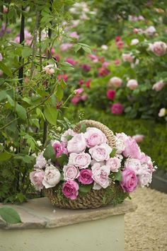 roses pour toi