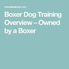 Boxer Dog Training Overview – Owned by a Boxer