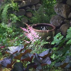 Cool spot on a hot day / In the Secret Garden with Astilbe arendesii 'Europa' & Ligularia dentata 'Britt-Marie Crawford'. / M Harlow / thegardenerseden.com