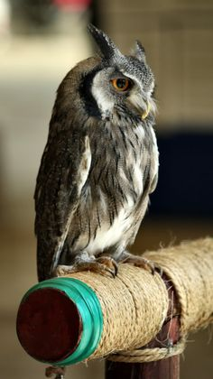 owl :  This Photo was uploaded by octorine. Find other Squirrel pictures and photos or upload your own with Photobucket free image and video ho...