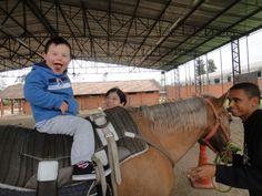 Cavalo utilizado na TAA