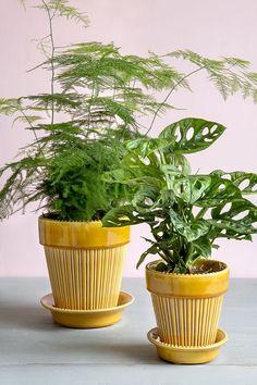 Simona är en vacker handgjord lerkruka med gul glasyr från Bergs Potter Planter Box Plans, Wood Planter Box, Wood Planters, Garden Planters, Planter Pots, Garden Art, Tulips Flowers, Flower Pots, Planting Flowers