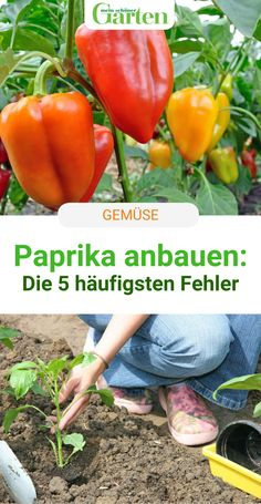 Growing Peppers, Life Is Too Short Quotes, Life Quotes, Autumn Trees, Garden Landscaping, Most Beautiful Pictures, Life Hacks, Herbs, Stuffed Peppers