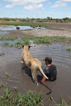 Man who raised lioness from cub now teaches her to hunt - AOL ...