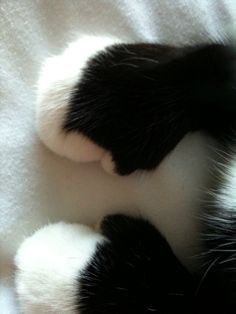 Cats leave paw prints on your heart. Cat Paw, Tuxedos Cat, Kittens Mittens, Cat Leaves, Kitty Paw,