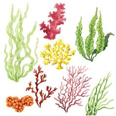 Find Set Watercolor Seaweed Corals Isolated On stock images in HD and millions of other royalty-free stock photos, illustrations and vectors in the Shutterstock collection. Arte Coral, Coral Art, Sea Drawing, Watercolor Drawing, Watercolor Paintings, Coral Painting, Coral Watercolor, Underwater Plants, Underwater Painting