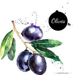 Creative olives watercolor vector design free vector download