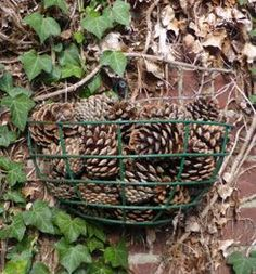 Pine Cones in Hanging Basket for Bug Hotel – Garden Projects Eco Garden, Garden Bugs, Forest Garden, Woodland Garden, Garden Club, Autumn Garden, Garden Crafts, Garden Projects, Glass Garden
