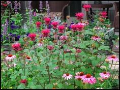 red bee balm with coneflower-- both spread but aren't invasive and look great together