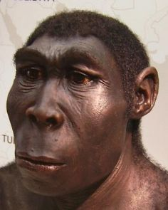Homo erectus was the first hominid that actually looked human. They were first to make sophisticated stone tools, use fire and were also the first to leave Africa, colonising large areas of Eurasia successfully.