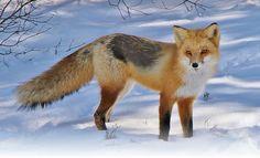 Fox N the City.com