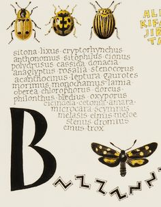 "calligraphy and illustration by joke boudens ""yellow"" (detail)"
