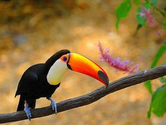 toucan, which is also used as cover for this board.