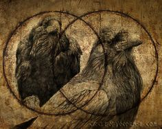 "As Thought is a masculine Principle, Huginn sits upon Odin's right shoulder; as the right side of our body is the masculine side of our human form.  Memory is a feminine Principle, therefor Munnin sits upon Odin's left shoulder; as the left side of our body is the feminine side of our human form.   I fear for Huginn, that he not come back, yet more anxious am I for Muninn never to return.""  ~ The Poetic Edda"
