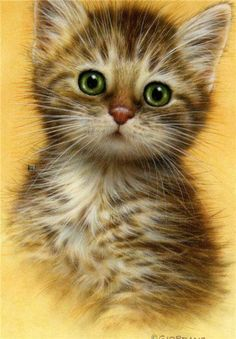 Giordano - Cats in color - Chat Kittens Cutest, Cats And Kittens, Cute Cats, Ragdoll Kittens, Funny Kittens, Bengal Cats, White Kittens, Black Cats, Animal Paintings