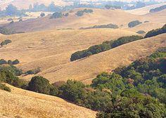 The rolling hills of  Petaluma, California