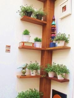 Interesting idea for corner. Could make similar for front of house window, single row of shelves for winter plant storage
