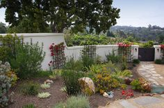 courtyard plants