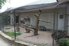 ZOO Antwerpen - Birds of Prey Aviaries (Caracara) Animal Room, Animal House, Zoo Animals, Animals And Pets, Macaw Cage, Duck House, Bird House Kits, Pet Monkey, Bird Aviary