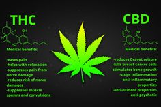 Cannabinoids: Benefits THC - CBD Cannabinoids are a group of active compounds found in cannabis or marijuana, ganja, anyway you wanna call it. There are over 500 natural compounds in marijuana, but only 85 are cannabinoids. Some types of cannabinoids together with similar compounds in our body