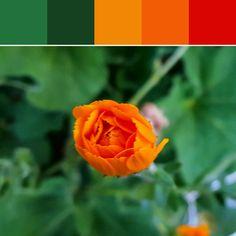 《Orange Bud Palette》