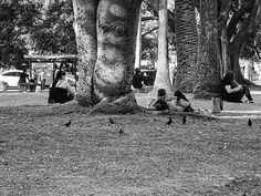 Pájaros.Sueltos y libres.#fotos,#fotografias,#blancoynegro,#fotografiacallejera,#paisajeurbano,#buenosaires,#gente,#paja...
