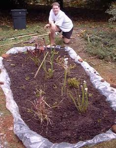 How to make a Carnivorous Plant Bog