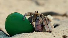 Shell We Move? Japanese real estate company Suumo offers hermit crabs new, comfy homes.