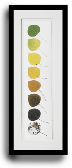 Life cycle of an aspen leaf