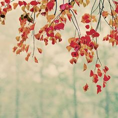 Dripping Foliage - Nature Photography - Autumn Leaves - Fall Wall Art by slightclutter on Etsy https://www.etsy.com/listing/195319092/dripping-foliage-nature-photography