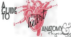 A Guide to the Heart