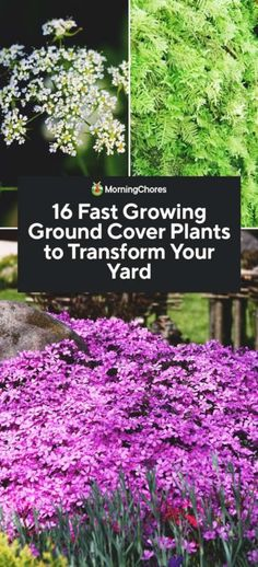 16 Fast Growing Ground Cover Plants to Transform Your Yard Do you have some blank areas in your landscaping? You need some fast growing ground cover plants that suppress weeds and grow quickly everywhere. Flowering Ground Cover Perennials, Partial Shade Perennials, Fall Perennials, Deer Resistant Perennials, Perennial Ground Cover, Perennial Grasses, Flowers Perennials, Purple Perennials, Sedum Ground Cover
