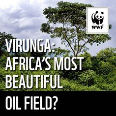 DRAW THE LINE Keep oil exploration out of Africa's oldest national park Virunga where the gorillas live. We need to keep an oil company, Soco International PLC (Soco), out of the park and stop it from exploring for oil.    http://wwf.panda.org/what_we_do/where_we_work/congo_basin_forests/problems/oil_extraction/draw_the_line_pledge.cfm?src=virunga_source=WWF+International_campaign=b11f59237e-draw_the_line_Save_Virunga_medium=email_term=0_61baba9791-b11f59237e-291535937