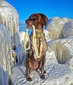 Lovely in @zaley_designs and @greentroutoutfitters  #yooperdog #gsp #germanshorthairedpointer #pointer #dog #dogsofinstagram #bestwoof #dogsandpals #excellent_dogs #dogleash #collar #dapperdog #winterwonderland #yooperlife by bella.and.lily