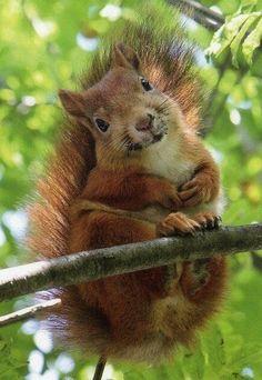 Squirrel!!! He's so happy!!