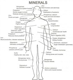 Minerals for the body