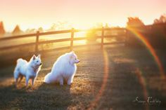 Wild Puppies by Soraya Rudofsky Photography.  Lensbaby Edge 80.