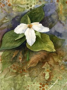 I love Trilliums. I have taken many photos of them in the woods in Northern Minnesota, I even have some growing in my backyard in Minneapolis. This painting was both watercolor painted and watercolor printed using a gel printing plate and Daniel Smith DuoChrome watercolor paints for the background texture. It is a really interesting combination when finished.