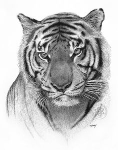 Pointillism technique of a tiger Tiger Sketch, Tiger Drawing, Tiger Painting, Tiger Art, Tiger Tiger, Realistic Animal Drawings, Pencil Drawings Of Animals, Animal Sketches, Art Sketches